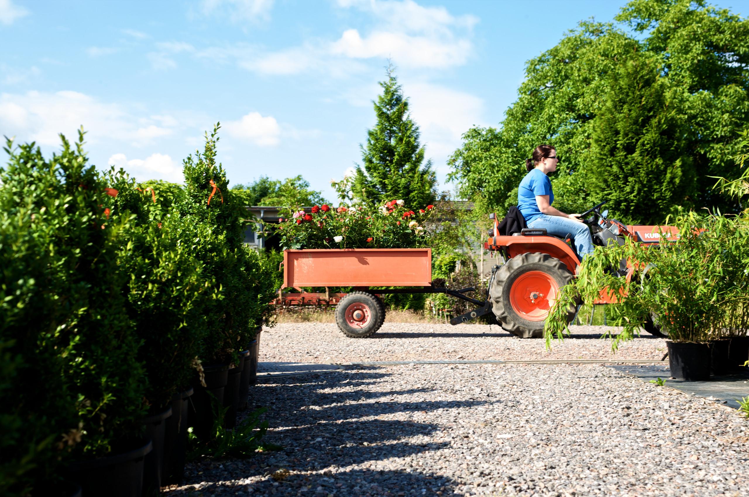 Gärtnerin der Manz Gartenwelt in Stühlingen-Schwerzen am Hochrhein auf der Freilandfläche der Baumschule.